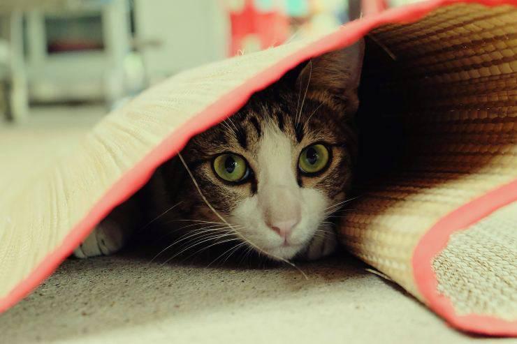 Come conquistare un gatto impaurito