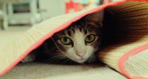 Come avvicinare un gatto spaventato