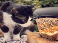 Insegnare al felino a non salire sul tavolo