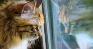 Il gatto e la distimia