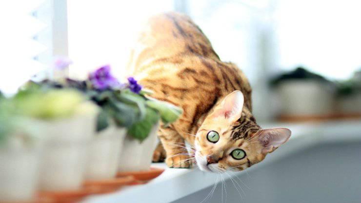 I dispetti dei gatti