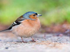 Uccelli e vitamine