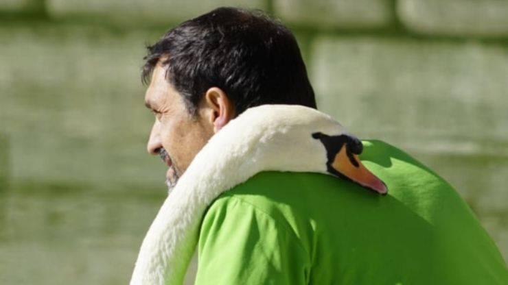 L'abbraccio del cigno con l'amico umano (Foto Instagram)