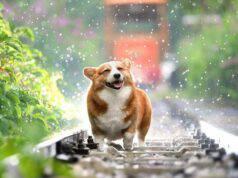 cinque sensi cane