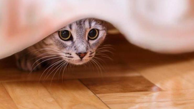 come aiutare il gatto quando ha paura