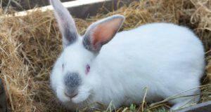 come calmare un coniglio