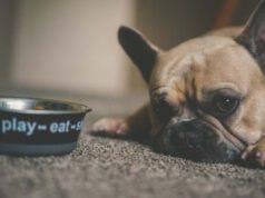 come insegnare al cane ad aspettare la ciotola