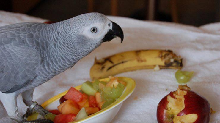 come invogliare il pappagallo a mangiare frutta e verdura