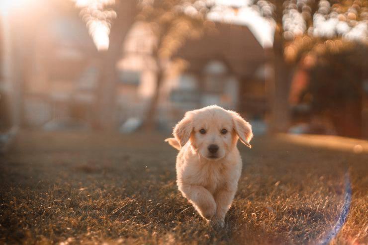 Portare un nuovo cane a casa