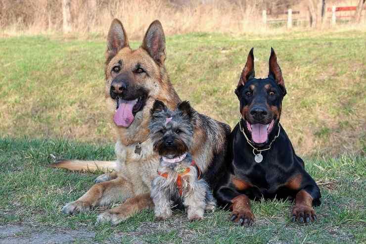 Razze canine che scavano di più nel giardino