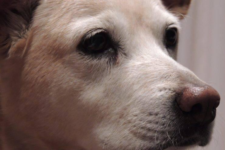 cane carrello spesa
