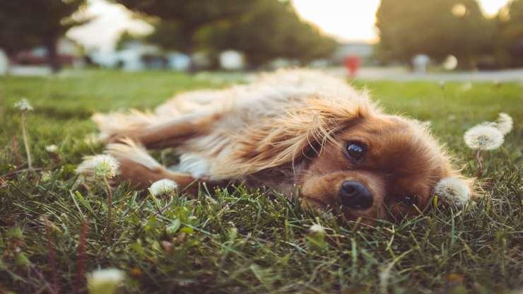 cane sdraiato nel parco (Foto Pixabay)