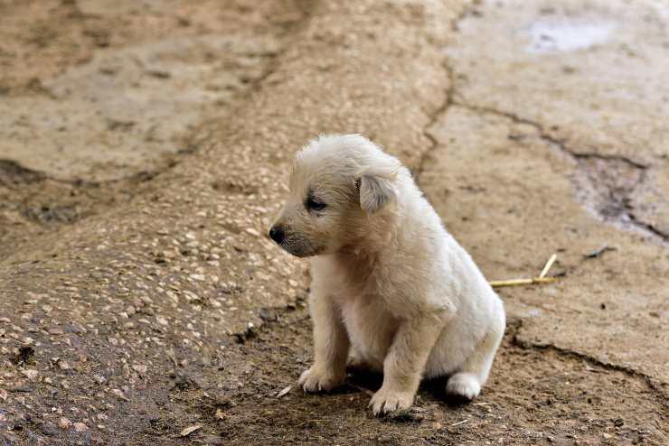 Il cane si irrigidisce e trema