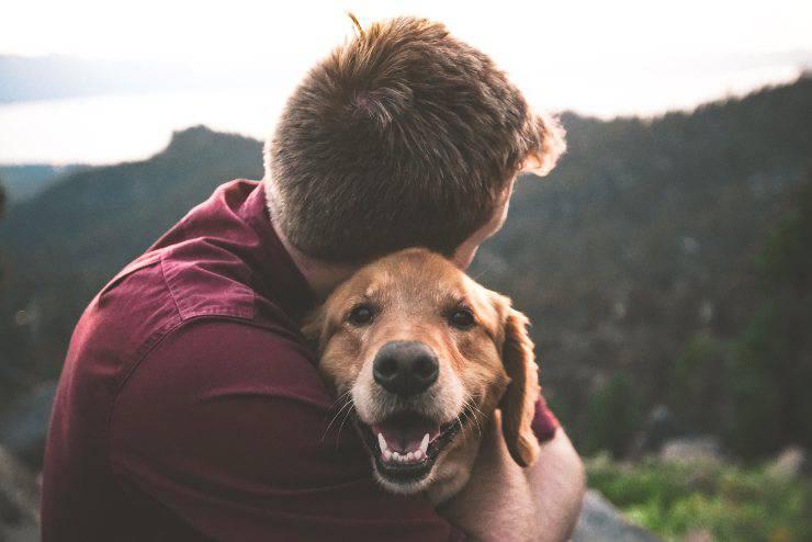Il tumore del cane