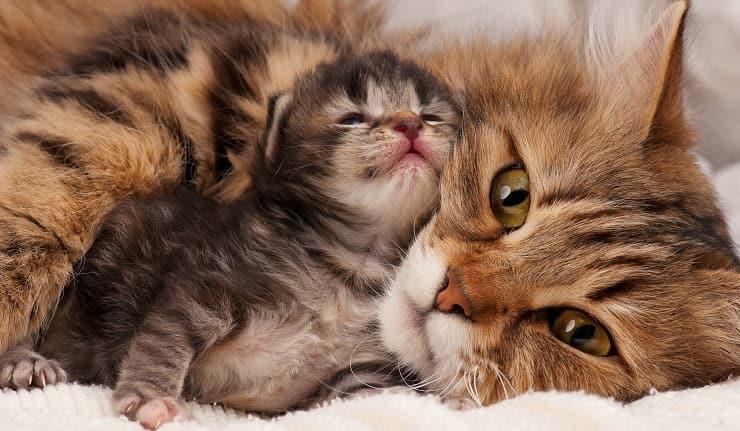 gatta mamma con cucciolo