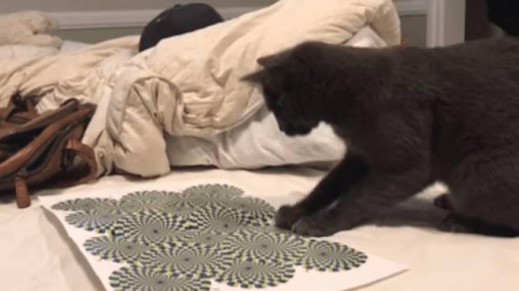 gatti percepiscono illusione ottica