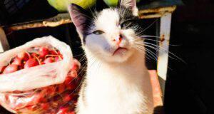 gatti possono mangiare ravanelli