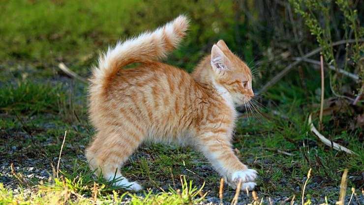 gatto gioca in giardino