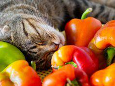 gatto può mangiare peperone