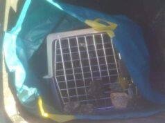 Gatto lasciato al sole rinchiuso in un bidone all'interno di una busta con del veleno per topi (Foto facebook)