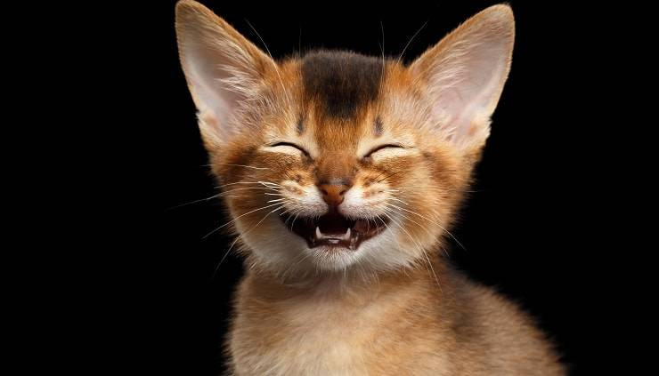 gattino sorridente