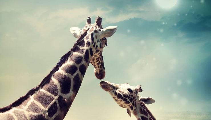giraffa mamma e figlia