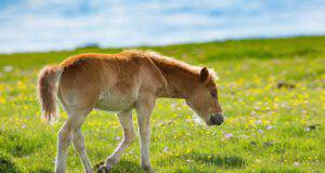 Il cavallo e la gastrite