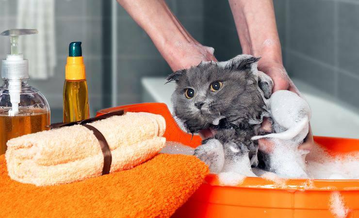 igiene gatto