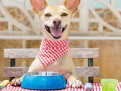 il cane può mangiare i ceci