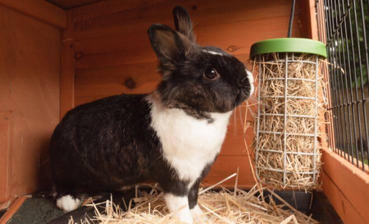 il coniglio mangia il fieno in modo divertente