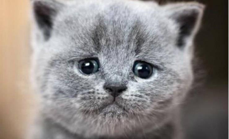 il gatto piange