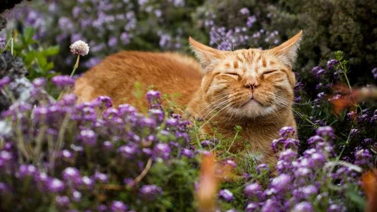 il gatto può mangiare il timo