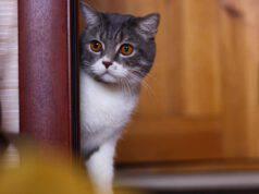 insegnare al gatto a rimanere fuori dalla stanza