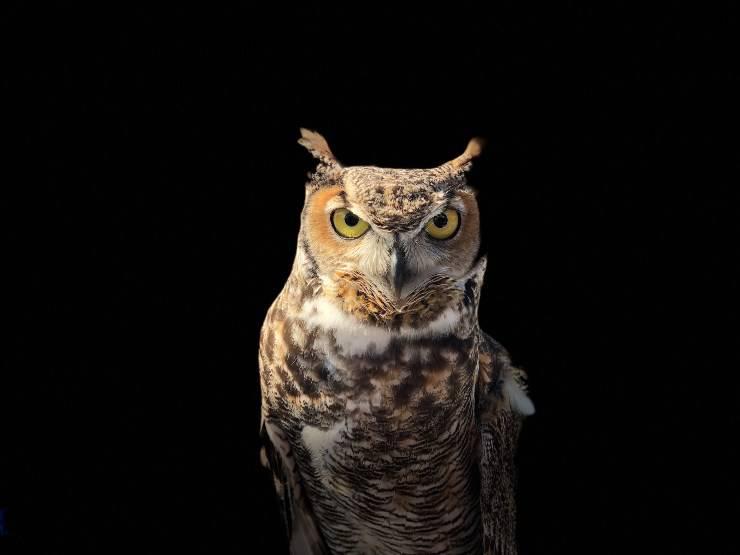 Animali che vivono di notte