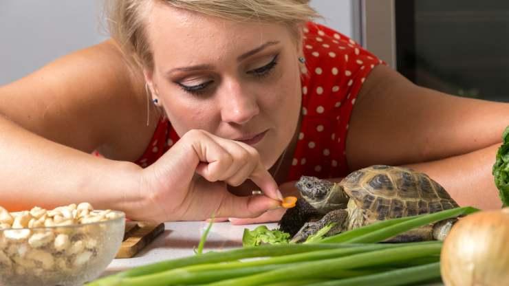 tartarughe possono mangiare carote
