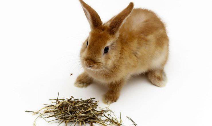 l'importanza del fieno nella dieta del coniglio