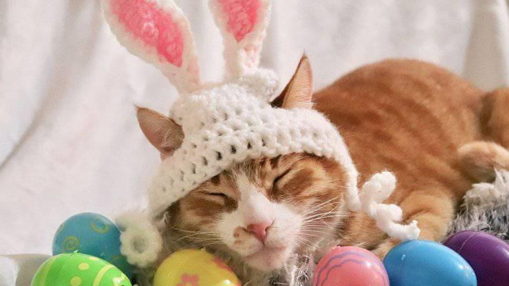 micio con uova di Pasqua