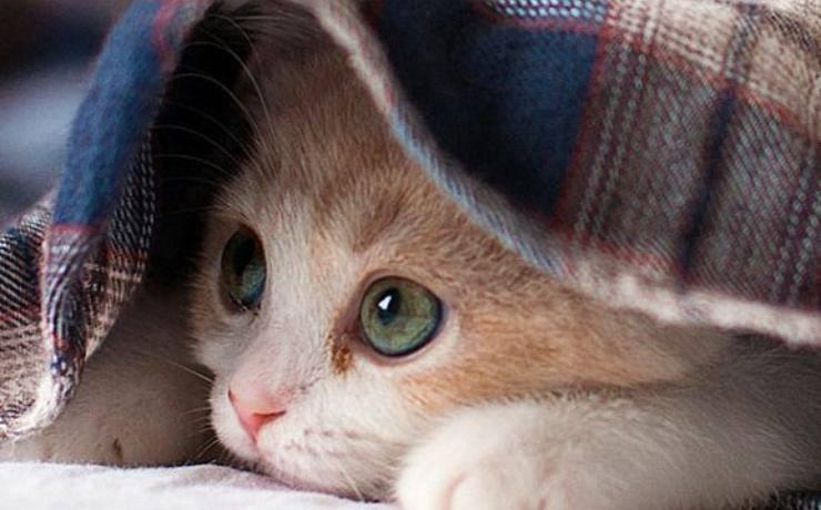 micio si nasconde per la paura