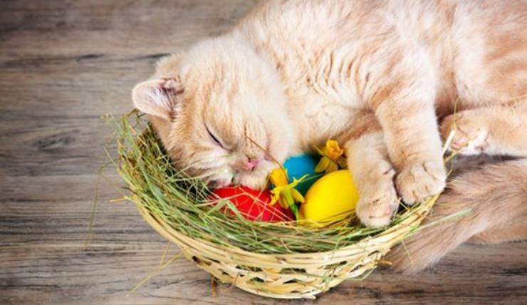micio tra uova colorate
