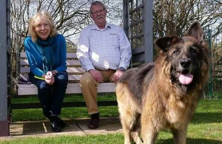 I nuovi proprietari di bella il cane di 11 anni a cui era stata legata una roccia al collo per affogarla nel fiume Trent