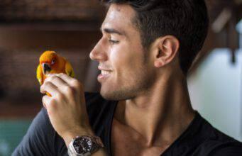 pappagallo può mangiare finocchi