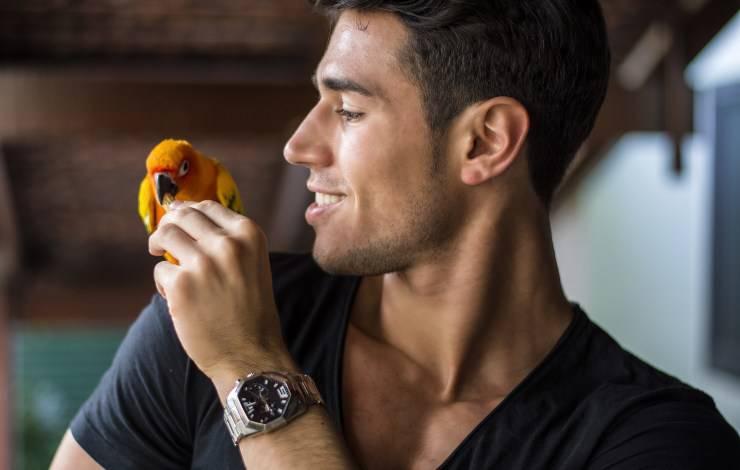 pappagallo mangia finocchio