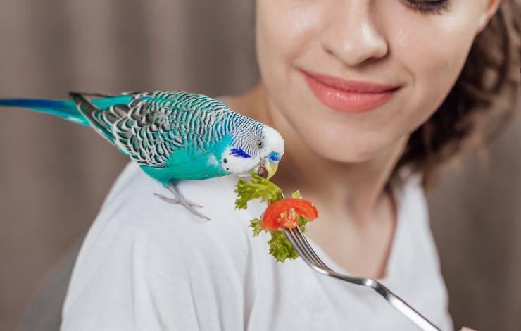 pappagallo può mangiare vedure
