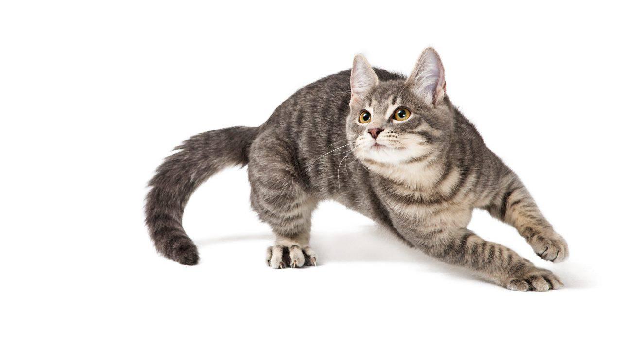 perché gatto corre storto