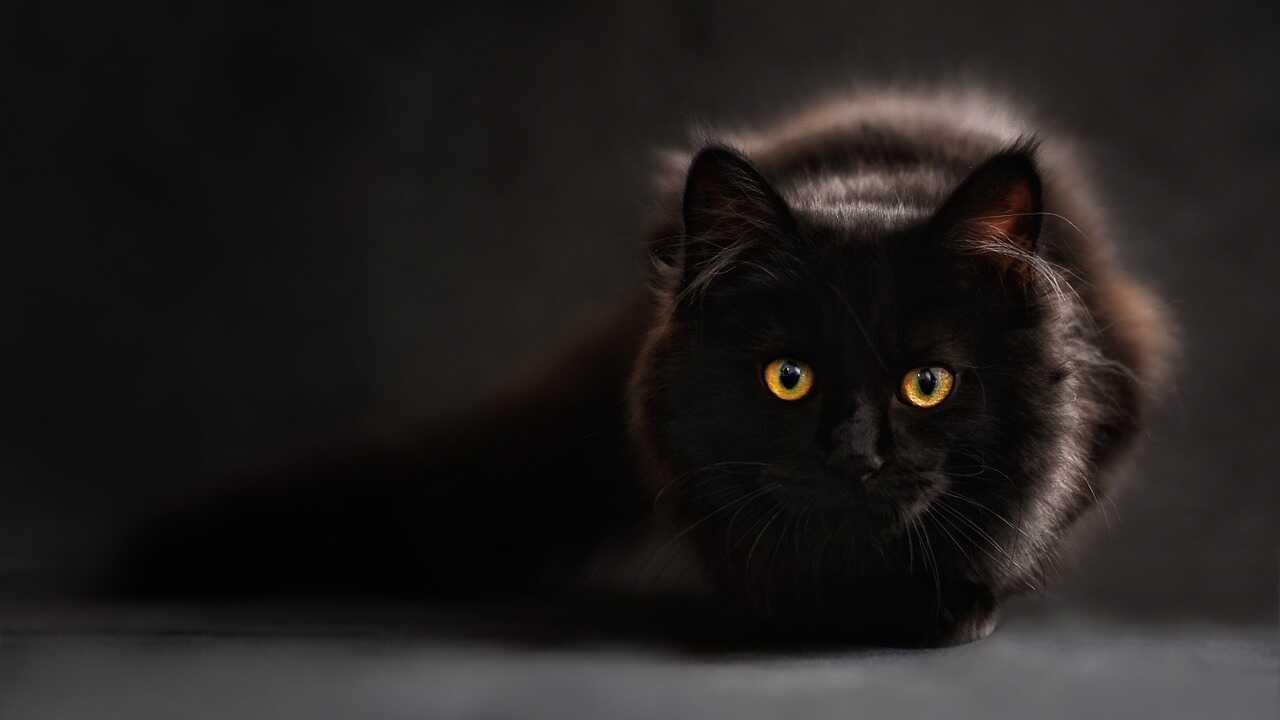 perché gatto evita contatto visivo