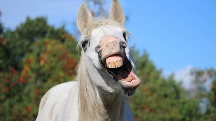 perché il cavallo sbadiglia