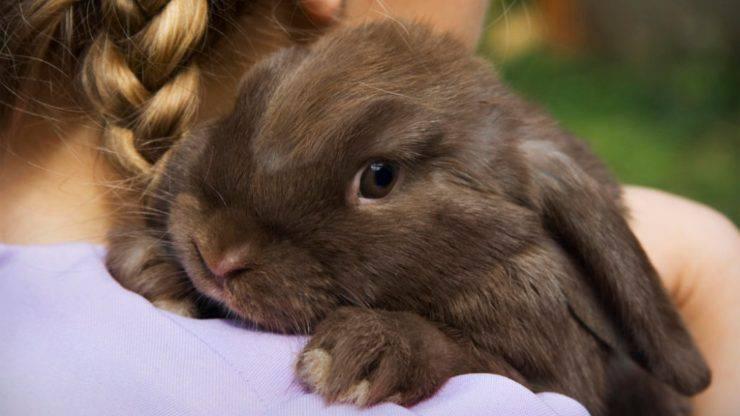 pericoli comuni per il coniglio