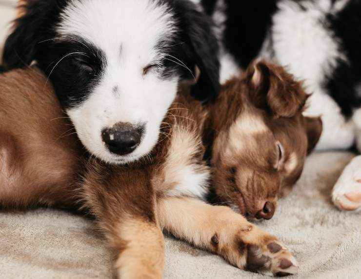 Razze canine che non scavano