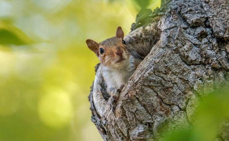 Il sonno dello scoiattolo