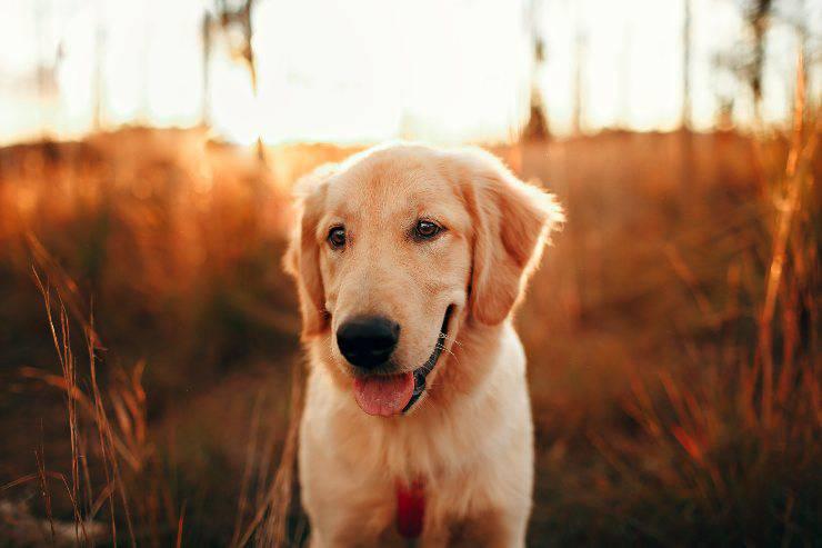 Cani che fanno buche